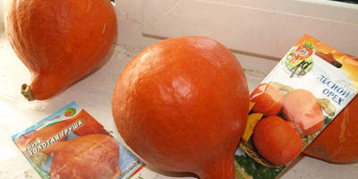 Порционные тыквы