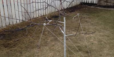 План-график обрезки растений в моём саду