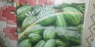 Как поступить с рассадой мелотрии?