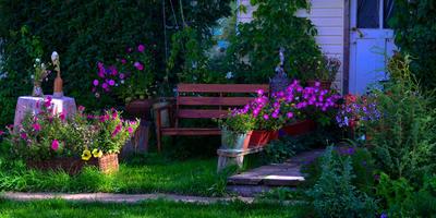 Август в нашем саду
