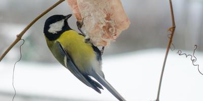Открытие птичьей столовой, год второй
