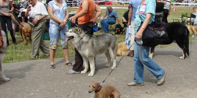 Дачные породы собак