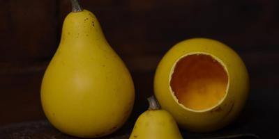 Семена декоративной тыквы