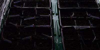 «ШунгиТерра» – удобрение из шунгита