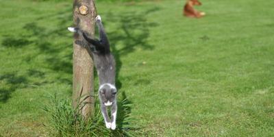 Галерея фотоизбушки: коты