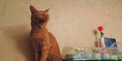 Про кота и муху