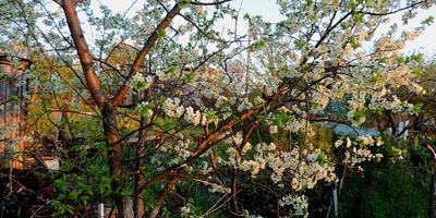 Закладываем сад правильно: секрет посадки деревьев и кустарников