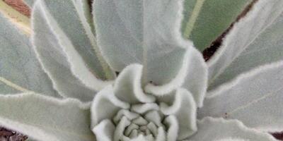 Подскажите, пожалуйста, что за растение выросло у меня в теплице?