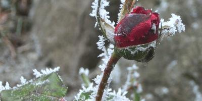 Красота мягкой зимы