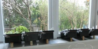 Можно ли выращивать рассаду в глубоких контейнерах?
