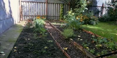 """Опыт совмещенных и уплотненных посадок, или """"Коммунальная квартира на огороде"""""""