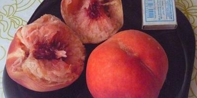 Персики из косточек