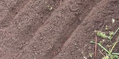 Три способа подзимнего посева семян