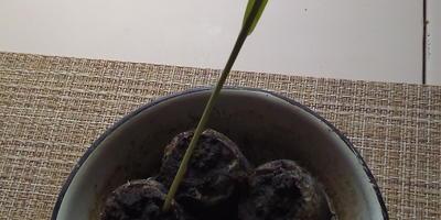 Способы выращивания расады