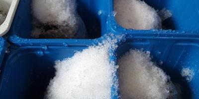 Посев мелких семян по снегу