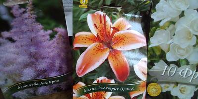 Луковичные и корневища цветов из магазина приходят в отличном состоянии
