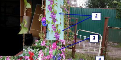 Цветущая веранда