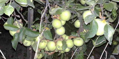 Яблочно-виноградный компот