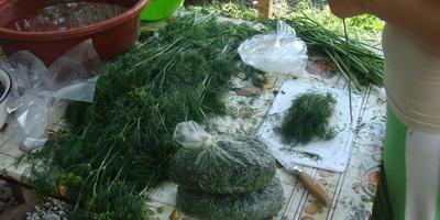 Зелень и ее заготовка