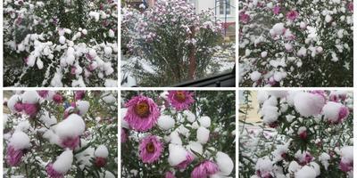 Осенние картинки или зимние?