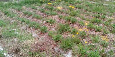 Как правильно разбить грядки для клубники на склоне?