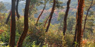 Немного про Южную Корею, или Как я начала свой путь в фотографии