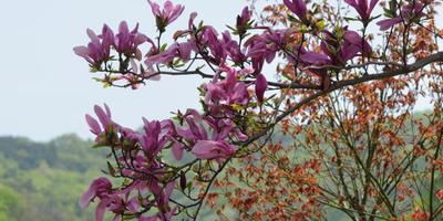 Продолжим про Корею... Сегодня у нас весна!