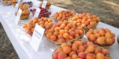 Фестиваль абрикоса