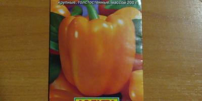 Сладкий перец Биг Мама. Тест на всхожесть