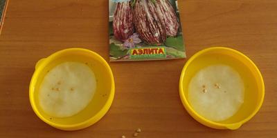 Баклажан Заморский полосатик - тест на всхожесть