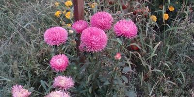 Поиск, Гавриш, СеДеК и другие: рассказ о том, как тестировались семена цветов