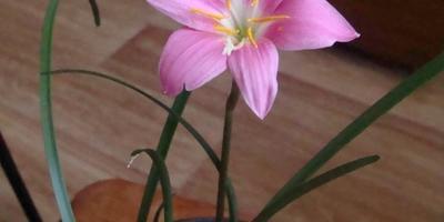 """Мои """"сумасшедшие"""" цветы"""