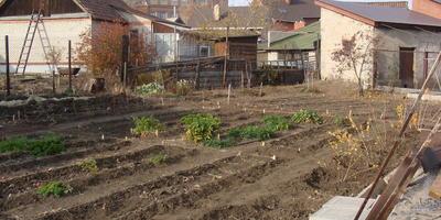 Домашнее задание №2: мой солнечный огород в Орске