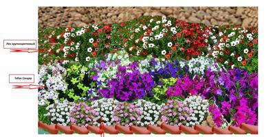 Весь огород как один большой цветник