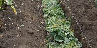 Природное земледелие, или Как хобби превращается в работу