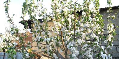 Домашнее задание №5. Защита плодового сада весной и в начале лета
