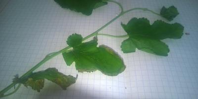 Помогите определить, что это за растения?