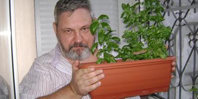 Как я вырастил 3 урожая базилика дома на балконе
