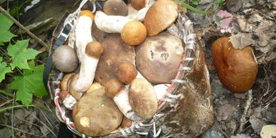 """С какой """"посудой"""" вы ходите по грибы?"""