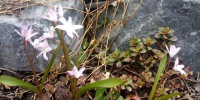 Наконец-то и ко мне пришла весна!!!!