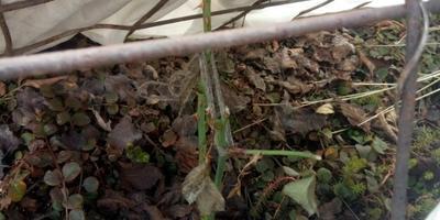 Как защитить растения от мышей зимой