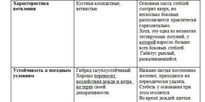 Петуния Александра F1. Итоговый отчет