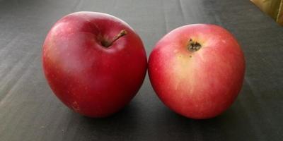 Подскажите сорт яблок, пожалуйста