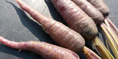 """Мои цветные овощи: темно-фиолетовая морковь. Морковь """"Пурпур"""""""