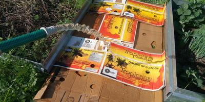 Секрет борьбы с сорняками в междурядьях: бесплатно, быстро и нетрудозатратно