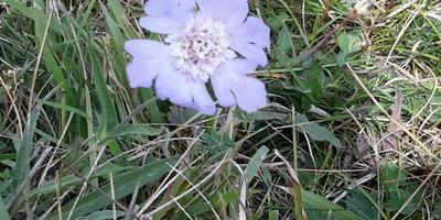 Подскажите, как называется этот цветок (растение)?