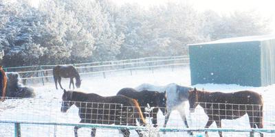 Замело лошадей снегом (продолжение)