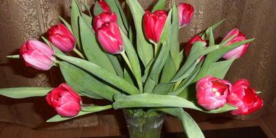 Подарок для жены Марины к 8 Марта!