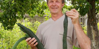 Открою вам секрет выращивания огурцов: держите семена ближе к сердцу