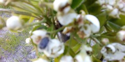 Что съедает цветы? Как с этим бороться?
